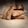Tanzanian leopard & Nordic night